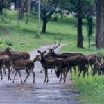Rajiv Gandhi National Park where is it located ? read  this article
