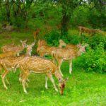 ಬಂಡೀಪುರ ರಾಷ್ಟ್ರೀಯ ಉದ್ಯಾನ ಎಲ್ಲಿದೆ ಗೊತ್ತಾ? ಈ ಲೇಖನ ಓದಿ