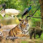 Rajiv Gandhi National Park